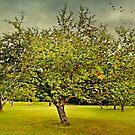 Under the Apple Tree by Scott Mitchell