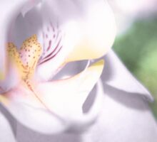 Soft Orchid Macro Sticker