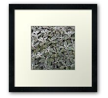 Leaves of grey Framed Print