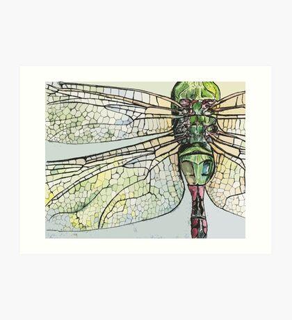 Dragon Fly wings Art Print