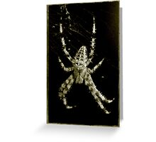 Old Creepy Spider Greeting Card