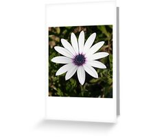 White African Daisy Greeting Card