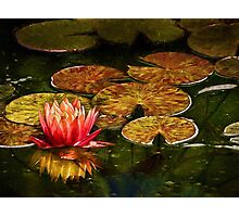 The artful lily Photographic Print
