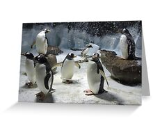 Gentle Gentoos  Greeting Card