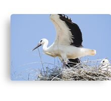 White Stork Couple in their Nest Canvas Print