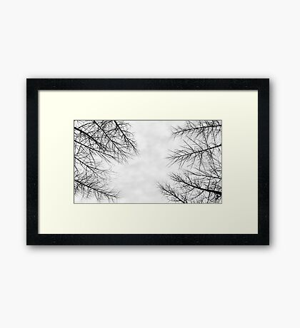 Branches II Framed Print