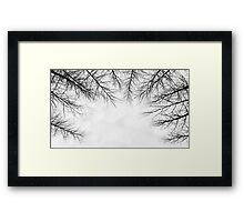 Branches III Framed Print