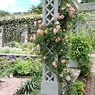 Peach & Green Trellis by CreativeEm