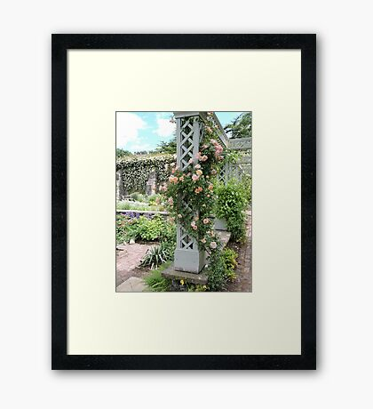Peach & Green Trellis Framed Print