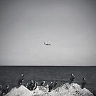 Flight by James McKenzie