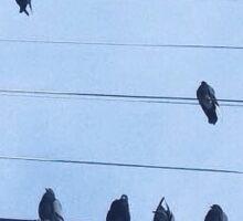 BIRDS ON WIRES Sticker
