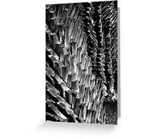 Palm Trees, Yamashita Pier Greeting Card