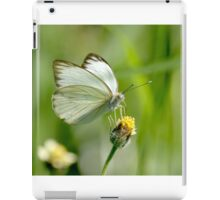 Great Southern White Butterfly iPad Case/Skin