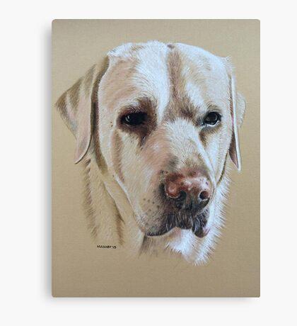Bailey the sweet faced golden Labrador Canvas Print