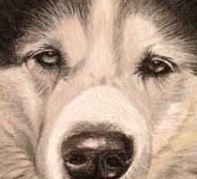 Saskia the stunning Husky Sticker