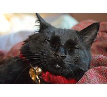 Sleeping Christmas Kitten Photographic Print