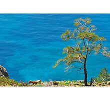 I sea tree! Photographic Print