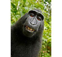 Monkey Selfie Photographic Print