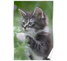 Cute Tabby Kitten Playing With Leaf Poster