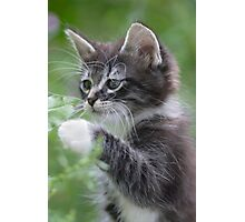 Cute Tabby Kitten Playing With Leaf Photographic Print