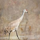 Artistic Sandhill Crane 2014-1 by Thomas Young