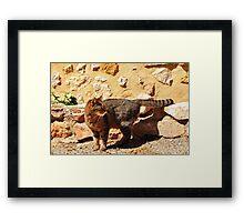 Rocky Cat Framed Print