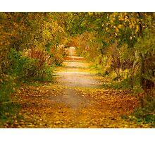 Autumn tree colours on narrow path Photographic Print