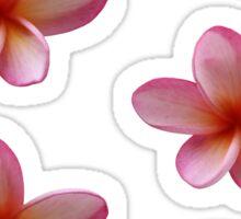 Pink Frangipani Sticker