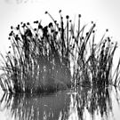 Reeds In The Mist by Bob Wall