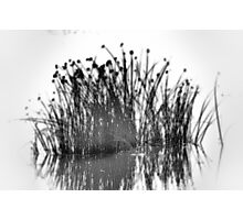 Reeds In The Mist Photographic Print