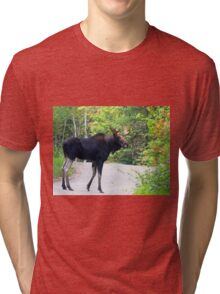 Maine Bull Moose on the road Tri-blend T-Shirt