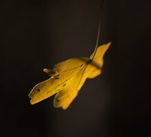 Autumn Leaf by Nigel Bangert