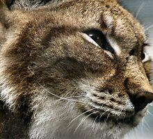 Lynx by Yampimon