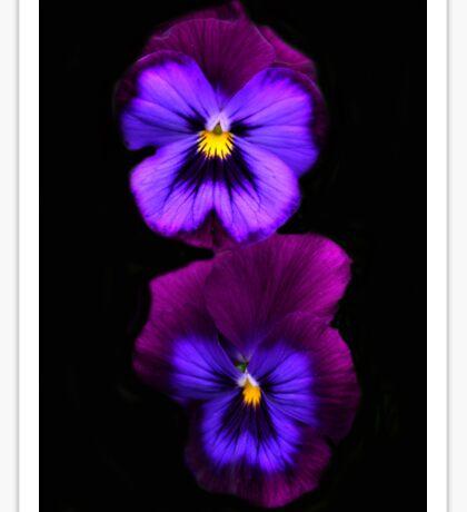 Purple Pansies  Sticker