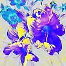 Ultraviolet Daylilies by Shawna Rowe