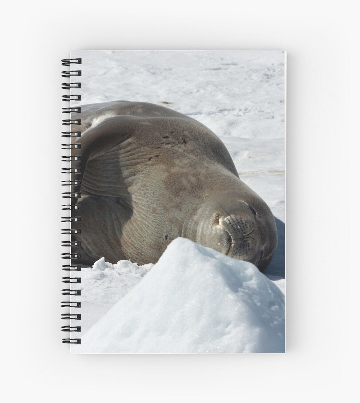"""Weddell Seal ~ """"My bed of ice and snow"""" by Robert Elliott"""