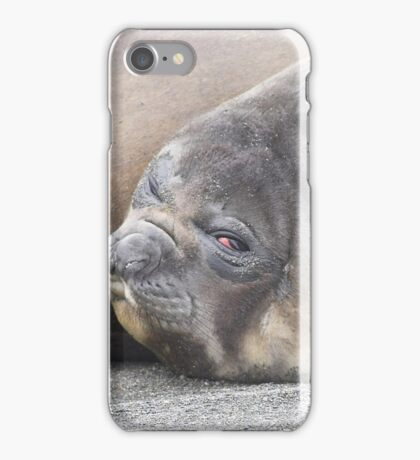"""Not another photo""   ~    Southern Elephant Seal Pup iPhone Case/Skin"