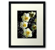 Friday Afternoon Tulips Framed Print