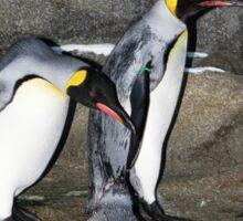Penguin Splash Sticker