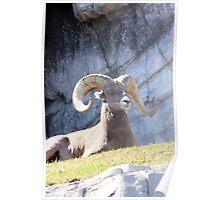 Wildlife Poster