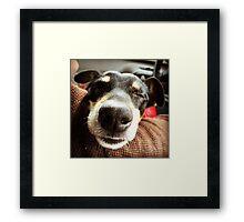 Jack Russel Nose Framed Print