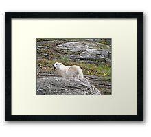 Loup Framed Print