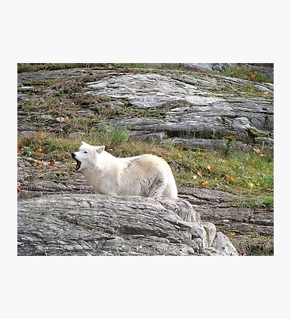 Loup Photographic Print