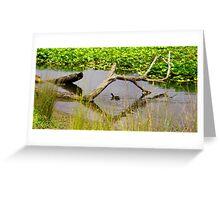 Ducking under natural bridge Greeting Card