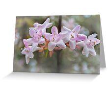 Back Yard Flowers Greeting Card
