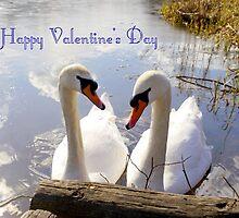 Happy Valentine's Day by wippapics
