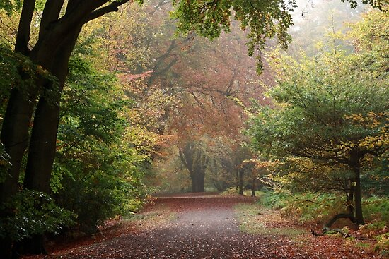 Dreamy Paths of Autumn Gold by SeeOneSoul