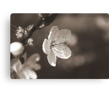 The Bloom of Another Day Canvas Print