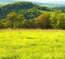 Green scenery mountains landscape with forest and road by juras