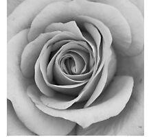 Noir Rose IV Photographic Print